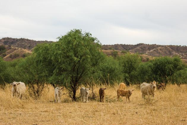 Rancho en el municipio de Imuris